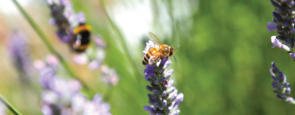 Ingredient: Propolis (Super antioxidant made by bees)